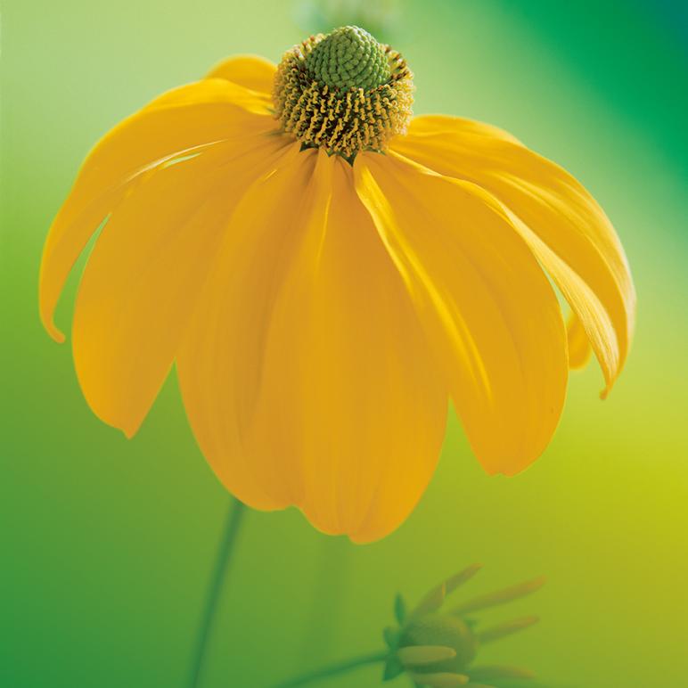 Gartenmarkt_Blume